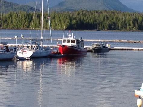 boat shearwater