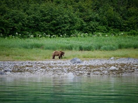 bear (1024x768)