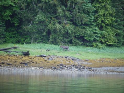 sandborn moose