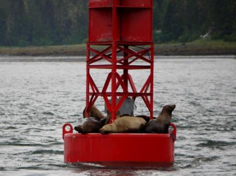 sea lions 2 (1024x765) (2)