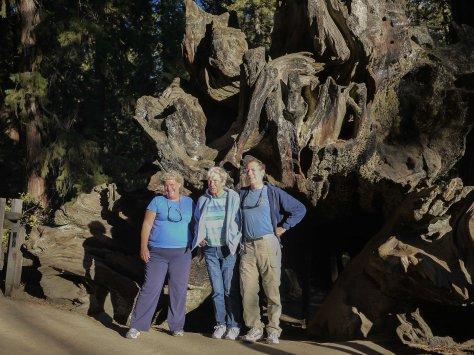 2014-10-23 Redwoods (133 of 142)