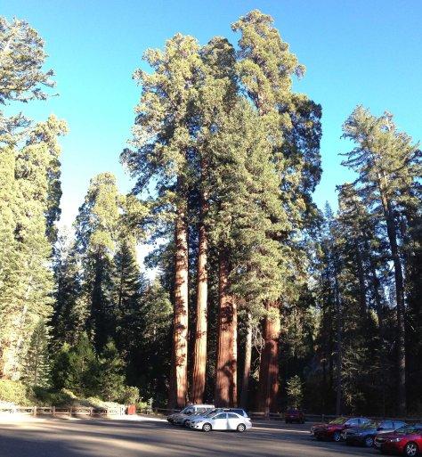 2014-10-23 Redwoods (138 of 142)