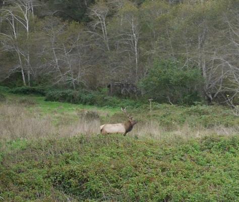 2014-10-30 Coastal Redwoods (21 of 77)
