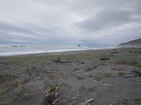 2014-10-30 Coastal Redwoods (32 of 77)