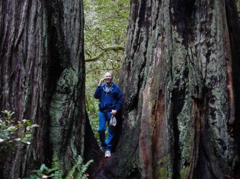 2014-10-30 Coastal Redwoods (45 of 77)