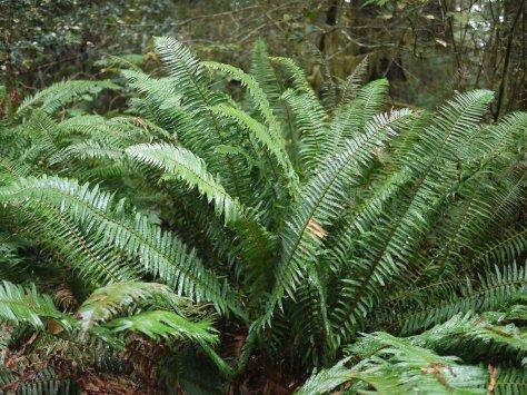 2014-10-30 Coastal Redwoods (47 of 77)