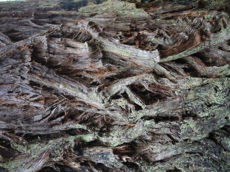 2014-10-30 Coastal Redwoods (54 of 77)