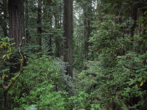 2014-10-30 Coastal Redwoods (67 of 77)