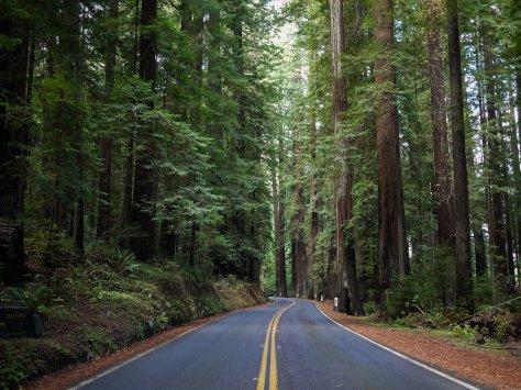 2014-10-30 Coastal Redwoods (9 of 77)